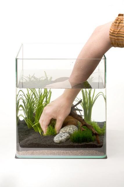 abri sous roche article le nano cube dennerle mise en route. Black Bedroom Furniture Sets. Home Design Ideas