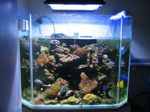 aquarium eau de mer 800 l. Black Bedroom Furniture Sets. Home Design Ideas