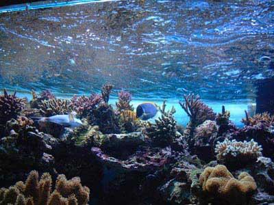 Les pierres vivantes pour l 39 aquarium marin et r cifal for Vente aquariophilie