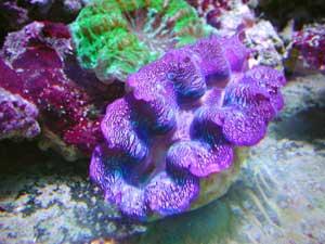 magazine aquarium eau de mer