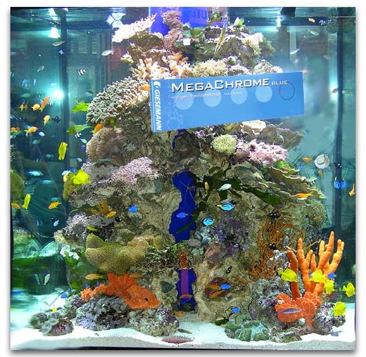 Commencer un aquarium d eau de mer 28 images le bac r for Aquarium eau de mer