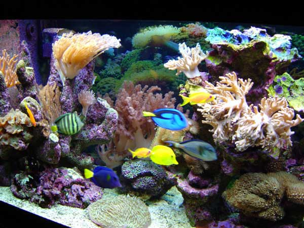 Aquariophilie convertir un aquarium d eau douce en bac for Aquarium recifal complet