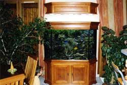 l 39 aquarium de paco. Black Bedroom Furniture Sets. Home Design Ideas