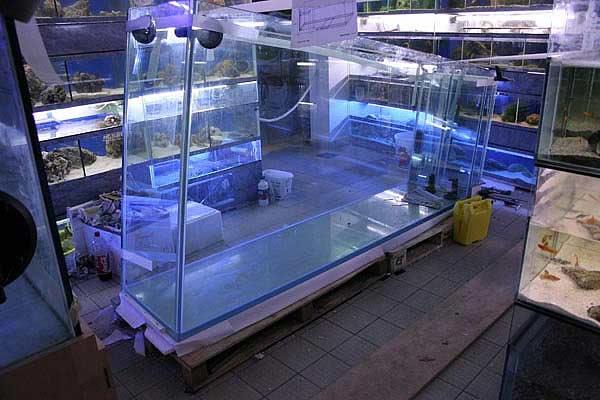cuve aquarium sur mesure. Black Bedroom Furniture Sets. Home Design Ideas
