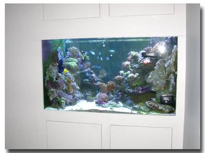 L 39 aquarium de sandrine for Aquarium de salon