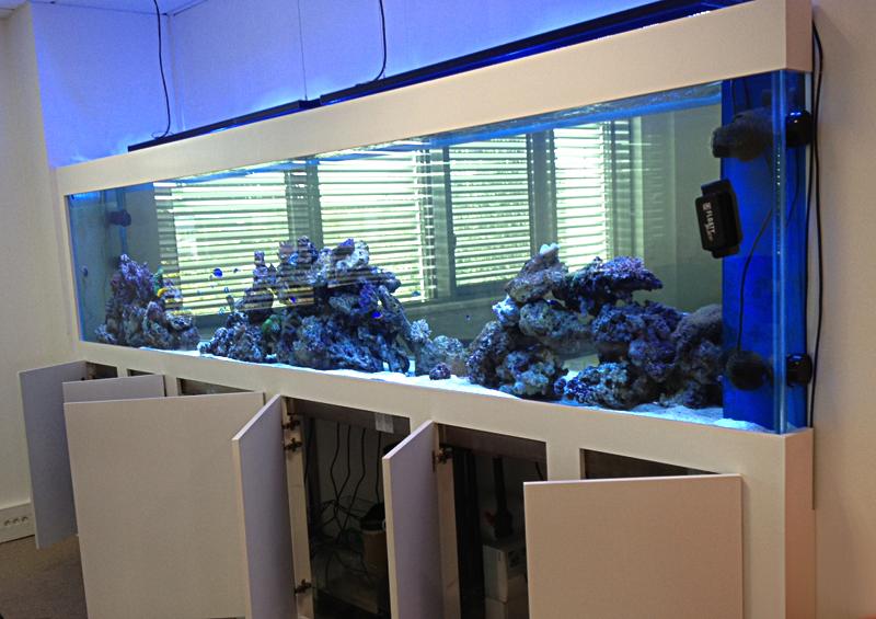 aquarium sur mesure herault aquarium sur mesure dans un cabinet dentaire oc an d aquarium sur. Black Bedroom Furniture Sets. Home Design Ideas