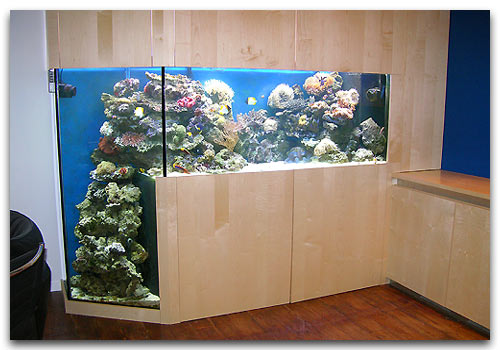 bac avec fosse reef l man aquarium r cifal en suisse. Black Bedroom Furniture Sets. Home Design Ideas