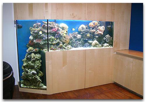 instalation d 39 un aquarium en deux jours. Black Bedroom Furniture Sets. Home Design Ideas