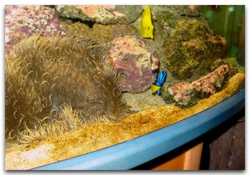 Les Algues Les De IndésirablesPestes L'aquarium PZukXiTO
