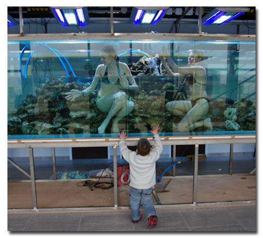 l 39 aquarium geant du groupe solutys abri sous roche. Black Bedroom Furniture Sets. Home Design Ideas