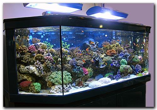 aquarium eau de mer vente. Black Bedroom Furniture Sets. Home Design Ideas