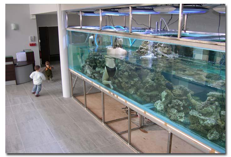 Realisation Decor Aquarium Recifal