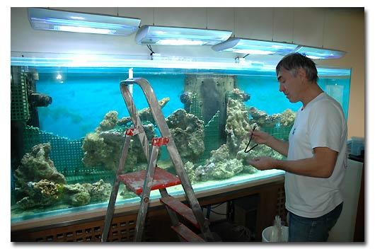L 39 Aquarium De Didier Abri Sous Roche