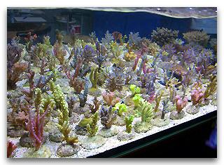 l 39 eau de mer pour l 39 aquarium marin abri sous roche. Black Bedroom Furniture Sets. Home Design Ideas