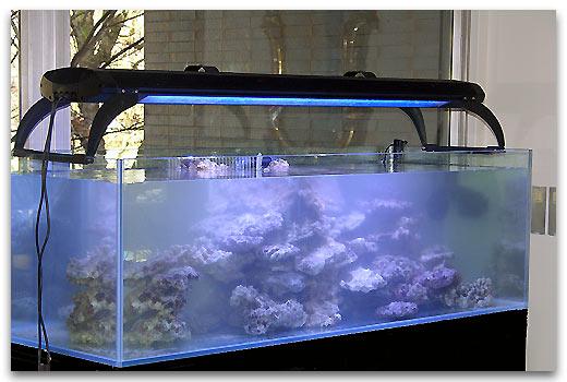 construire un aquarium eau de mer. Black Bedroom Furniture Sets. Home Design Ideas