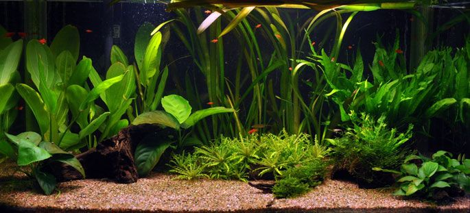 les plantes aquatiques abri sous roche