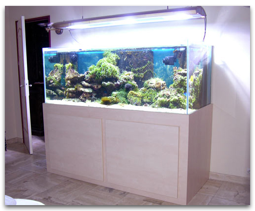 Aquarium eau de mer magasin for Meuble aquarium design
